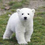 Baby Bear ツ